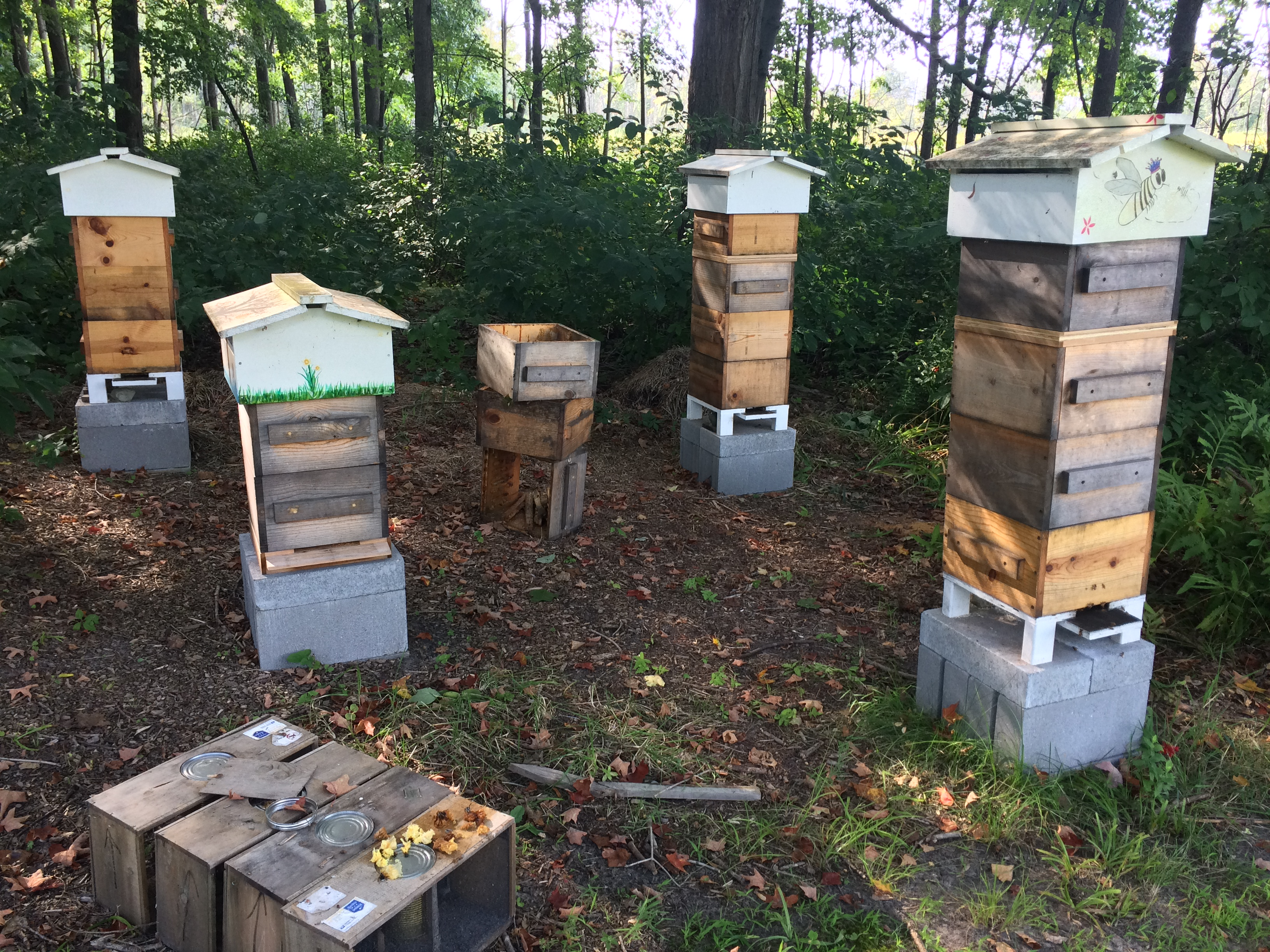 About the Warre Hive
