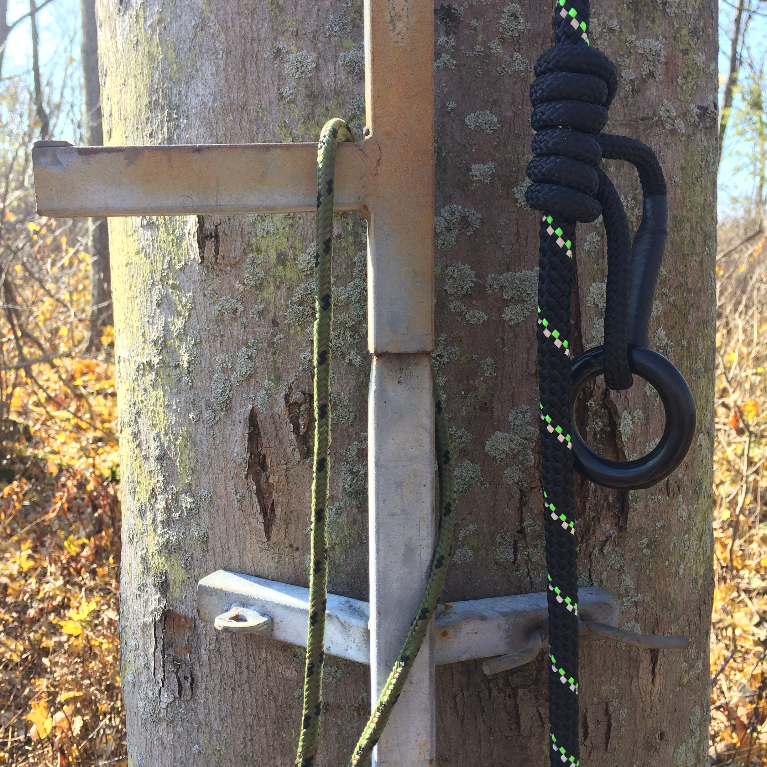 White Tailed Deer Tree Stand Safety Primal Woods